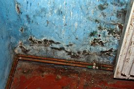 picture of spores  - Dangerous mold fungus on the wall in a room near a heater - JPG