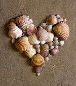 image of valentine heart  - valentine heart made with shells - JPG