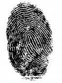 Fingerprint 5