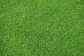 stock photo of grass area  - fresh lawn grass - JPG