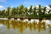 palm tree reflection