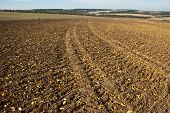 tractor traces in field