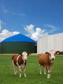 Dos vacas frente a una planta de energía de la biomasa