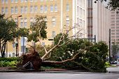 NEW ORLEANS - SEPT 1: A fallen tree lies on the ground after Hurricane Gustav on September 1, 2008 i