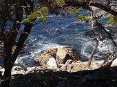 Tree Framed Ocean On The Rocks