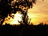 Trees And Sunsets