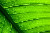 stock photo of green leaves  - Close - JPG