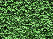 Dotty Green Leaves Background