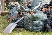 Garden Waste. Brown Leaves And Rubbish Collected From A Gardening Tidy Up. Spade Over Sacks Of Garde poster