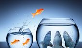 Shark Trap - Business Risk Concept - Goldfish Jumping In Shark Tank poster
