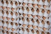 Eggs For Sale ,chicken Eggs In Egg Tray,many Eggs In Crates, In A Row, Chicken Farm, poster