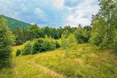 Summer Scenery On A Cloudy Day In Mountains. Meadow On Hillside Near The Forest. Mixed Beech, Spruce poster