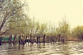 Flooded Trees In The Green Meadow Over The Banks Of The Danube River poster