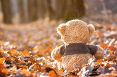 Teddy Bear Sits Back On Fallen Autumn Leaves poster