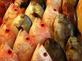 Various Sea Basses Or Grouper Fish