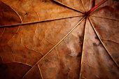 Faded Leaf Veins