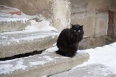 Abandoned Street Cats, Animal Abuse, Sadness. Black Fluffy Cat On A Background Of Snow. Homeless Bla poster