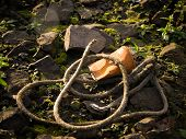 Rusty Tin Can And Old Rope