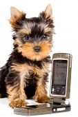 The Puppy With A Mobile Phone