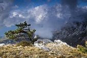 Amazing view from the mountain Ai-Petri, Crimea, Ukraine, with a tree on the foreground