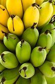 Raw Green And Yellow Ripe Bananas