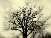 Misty Tree Silhouette