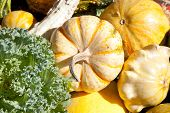 harvest of gourds and plants
