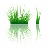 Reflected vector grass pattern. Vector illustration