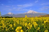 Large And Small Ararat In Armenia