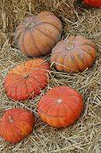 five pumpkins on some hay