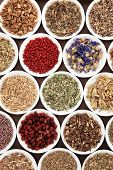 Herbal medicine selection also used in witches magical potions.