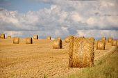 golden hay roll in wheat field