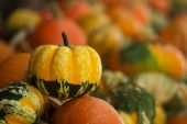 Yellow Soft Focus Gourds poster