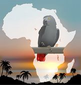 African map with background and Grey Parrot