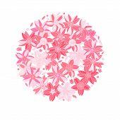 Pink sakura flowers on white circle