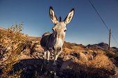 Donkey in the Mojave Desert