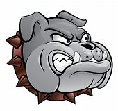 foto of bull head  - Bull dog vector illustration  - JPG