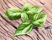 Basil leaves on old wooden table.
