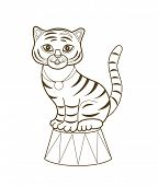 Cute circus tiger (illustration for coloring book)