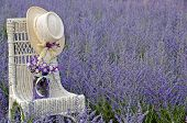picture of purple sage  - Hat and purple mason jar on a white wicker chair in field of purple Russian sage - JPG