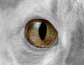Cat Eye Close-up