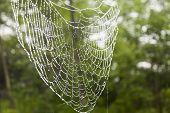 Cobweb In The Rain