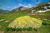 foto of lichenes  - Beautiful Lichen in spring colors with green field - JPG