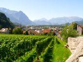 Vineyard Liechtenstein