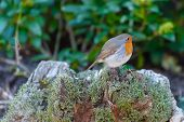 Robin On Moss