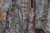 the image of a tree bark background