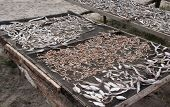 Fish Drying