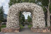 Elk Antler Arches