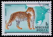 Stamp Series Wild Animals