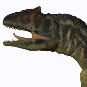 Allosaurus Head